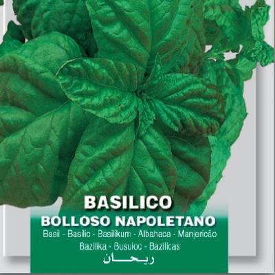 ocimum-basilicum-napolitano