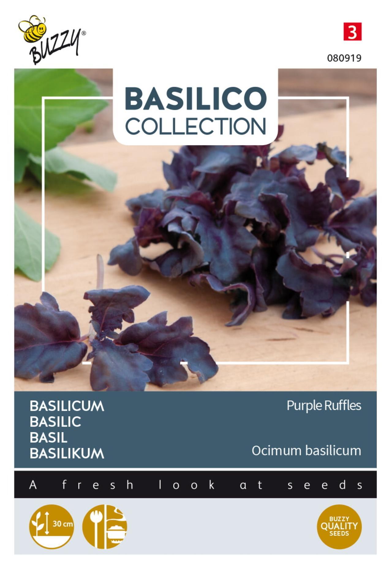 Ocimum basilicum 'Purple Ruffles' plant