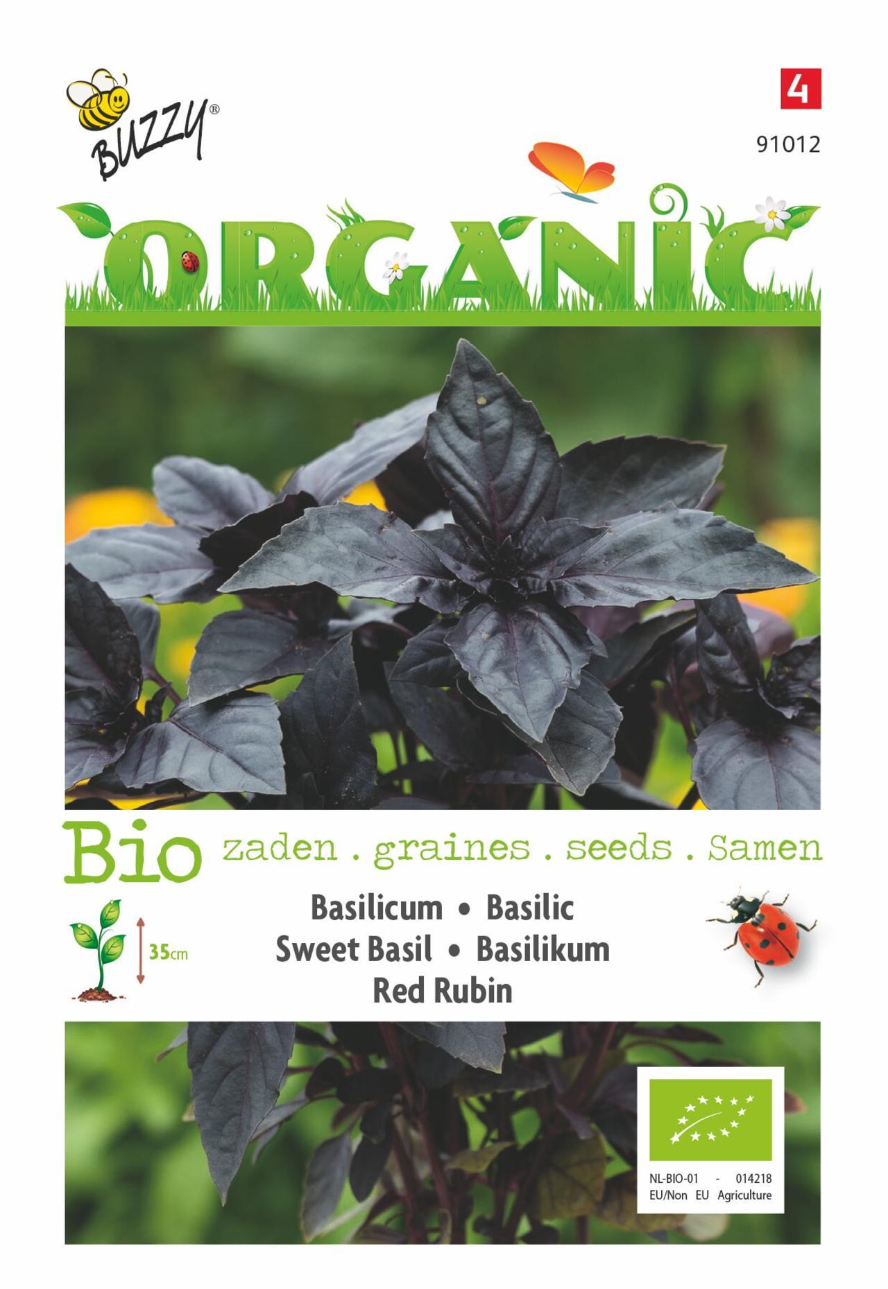 Ocimum basilicum 'Red Rubin' (BIO) plant