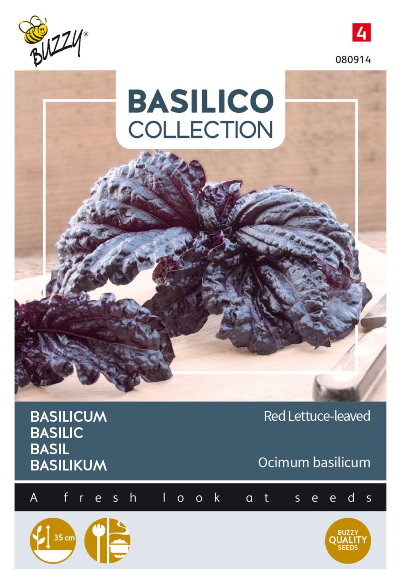 Ocimum basilicum 'Rode slabladige' plant