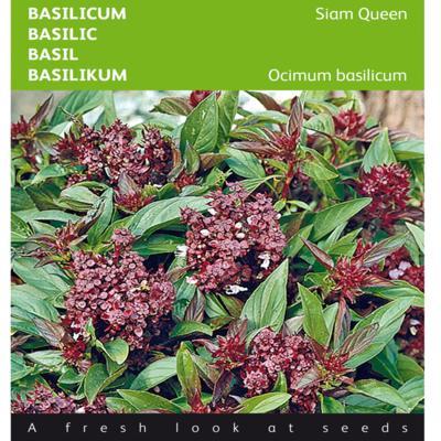 ocimum-basilicum-siam-queen