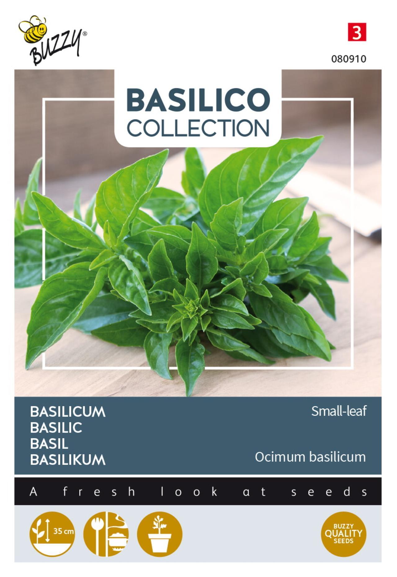 Ocimum basilicum 'Small-leaf' plant