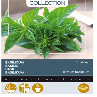ocimum-basilicum-smallleaf