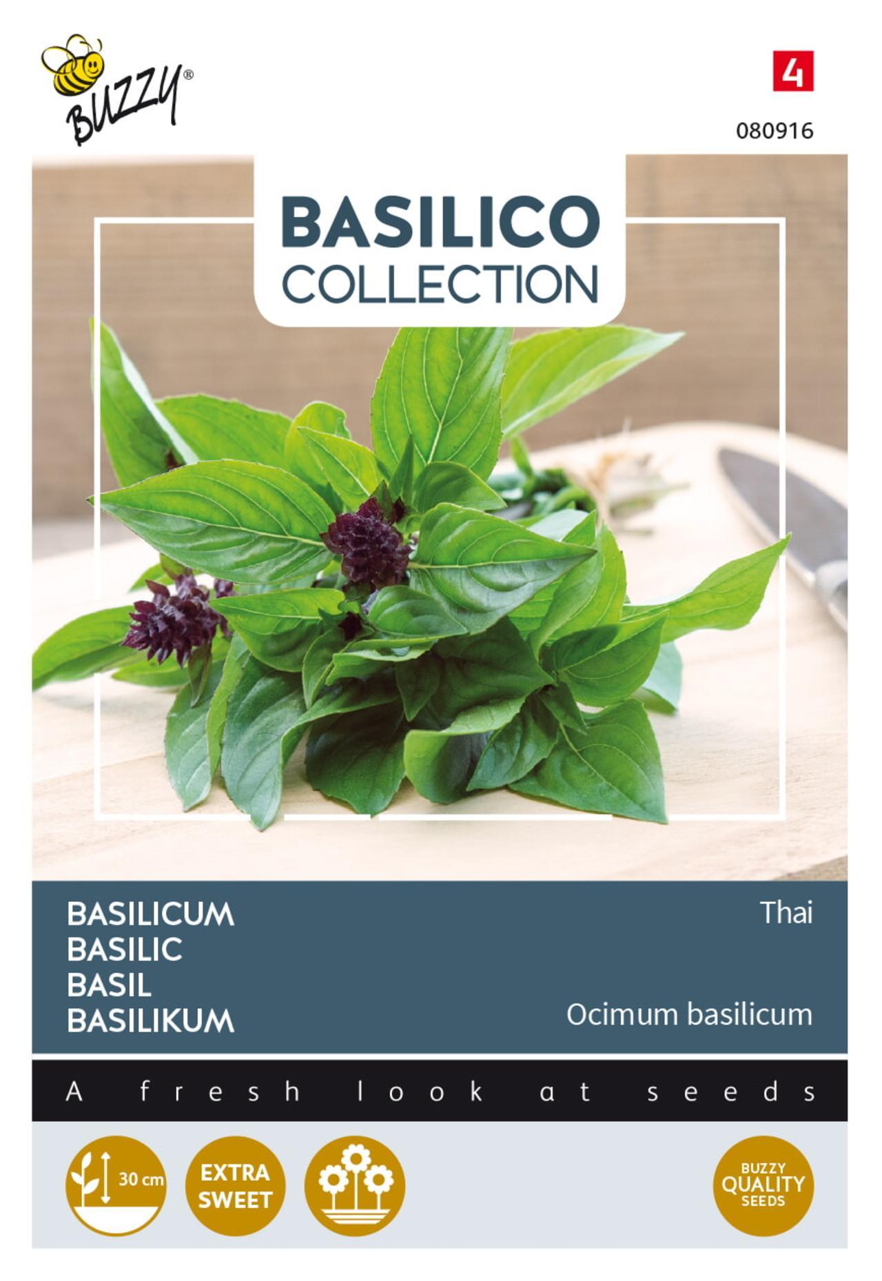Ocimum basilicum 'Thai' plant