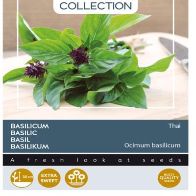 ocimum-basilicum-thai