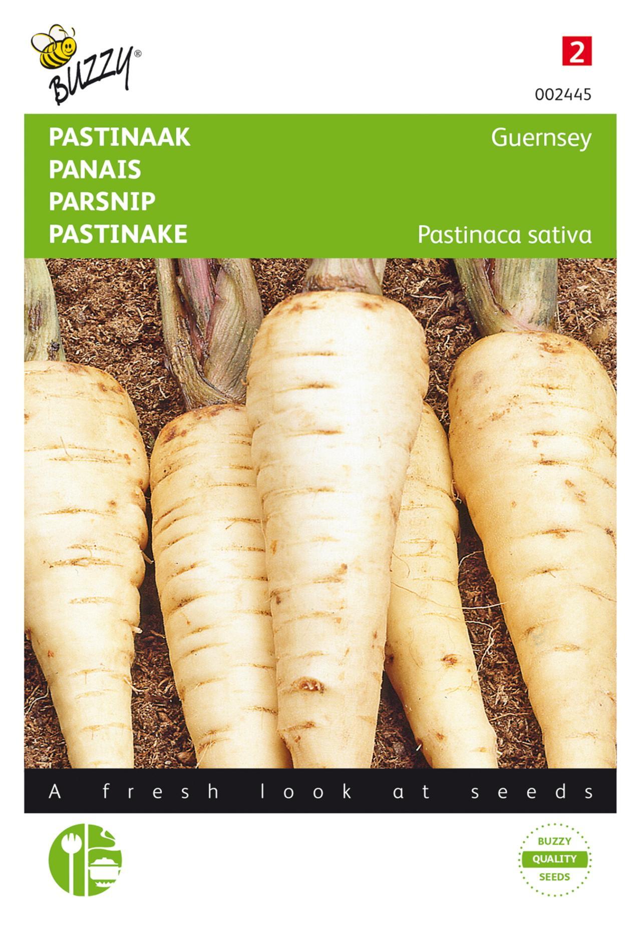 Pastinaca sativa 'Demi-Long De Guernsey' plant