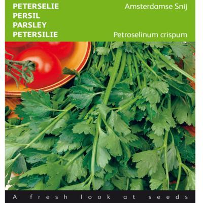 petroselinum-crispum-amsterdamse-snij