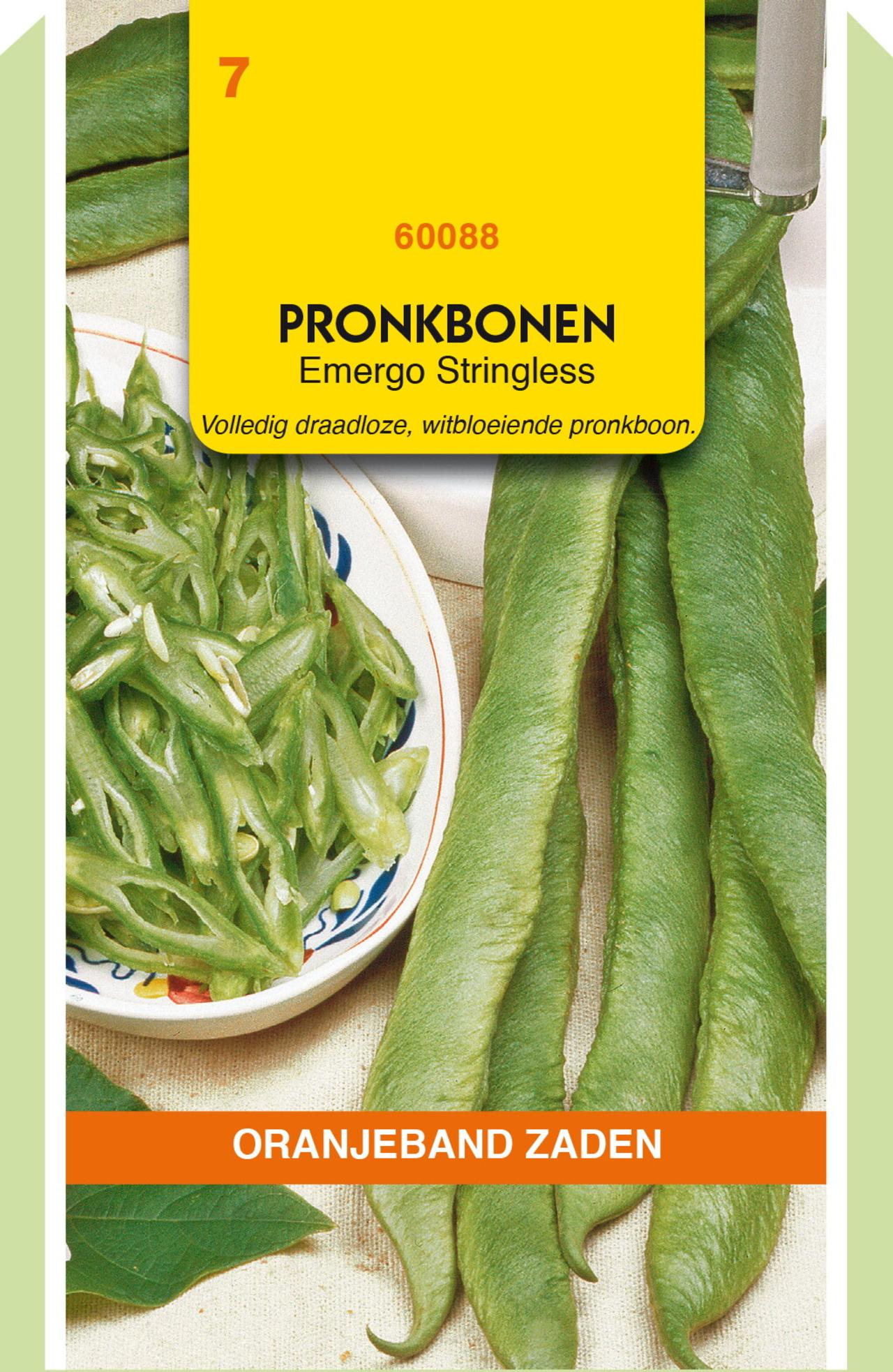 Phaseolus coccineus 'Emergo Stringless' plant