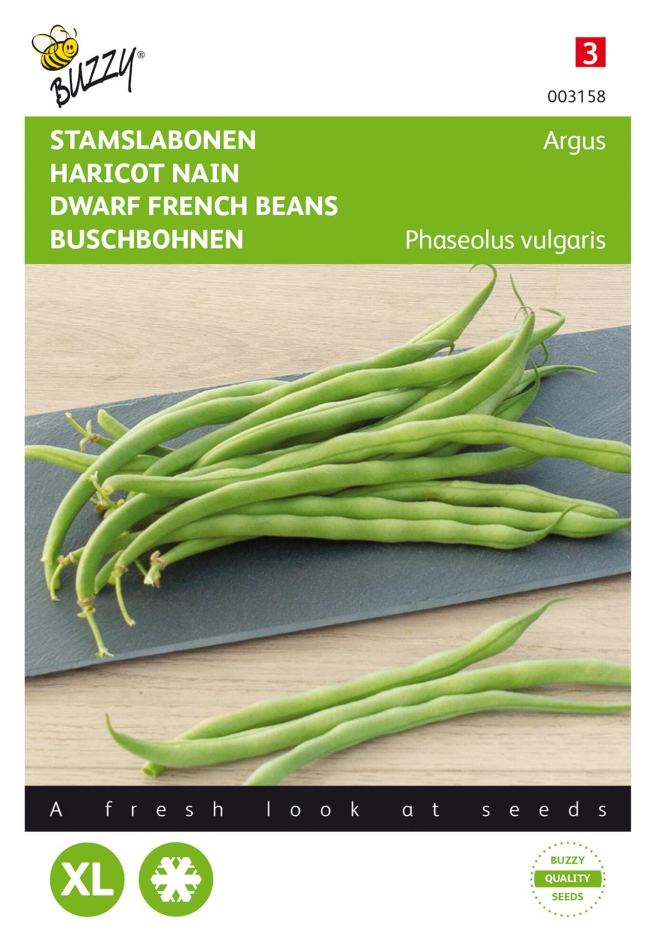 Phaseolus vulgaris 'Argus' plant