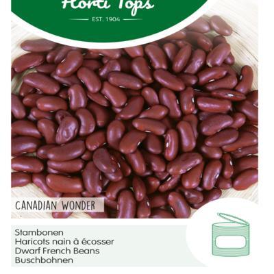 phaseolus-vulgaris-canadian-wonder