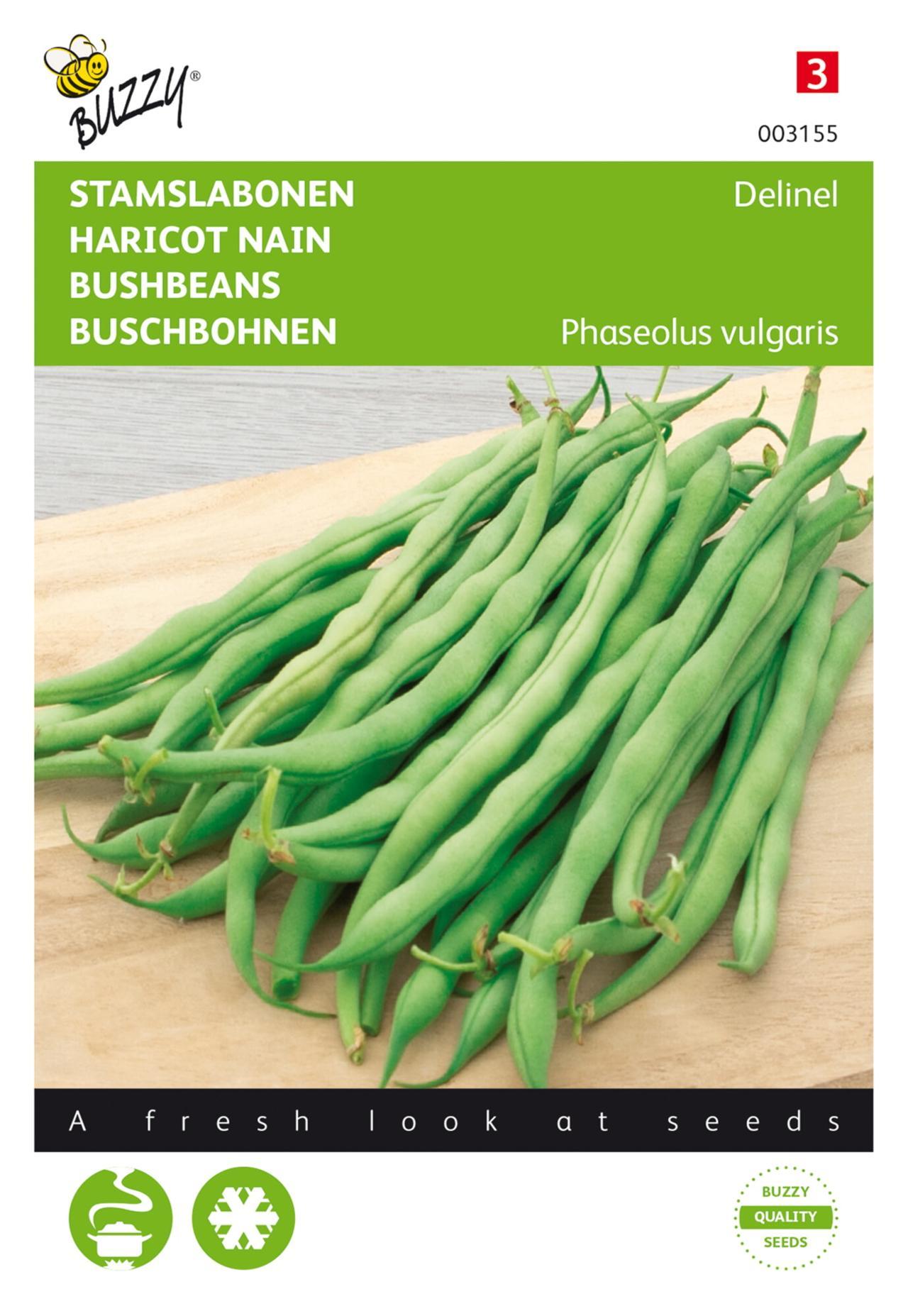 Phaseolus vulgaris 'Delinel' plant