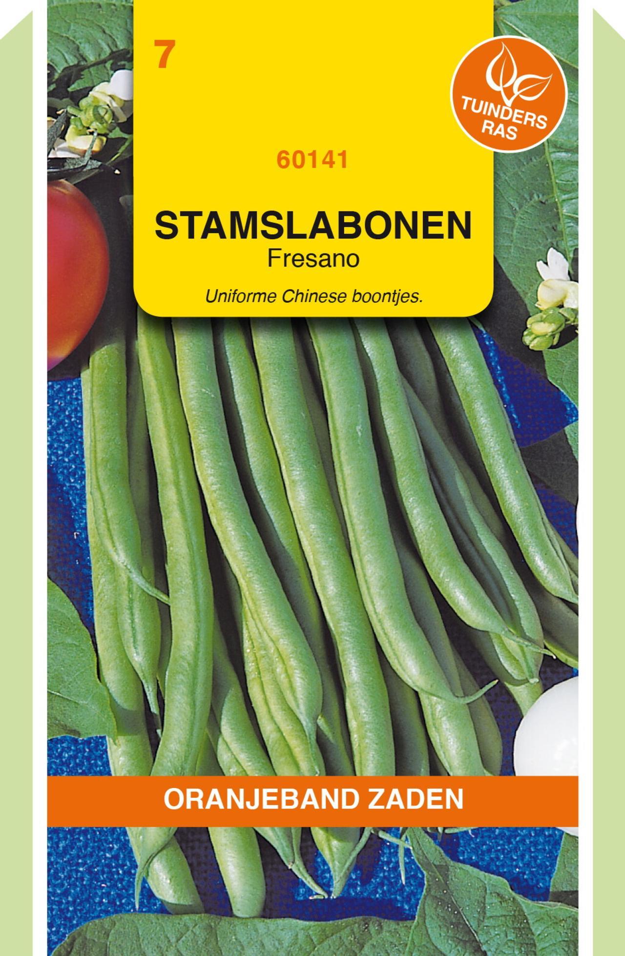 Phaseolus vulgaris 'Fresano' plant