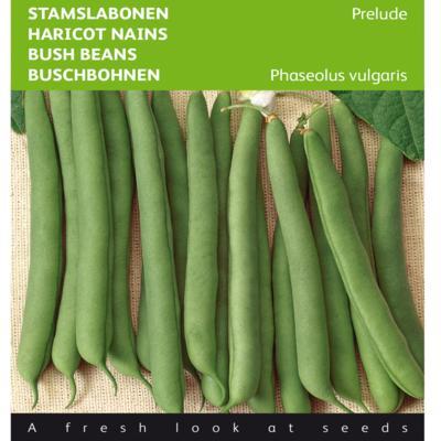 phaseolus-vulgaris-prelude