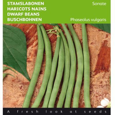 phaseolus-vulgaris-sonate