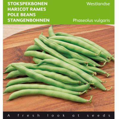 phaseolus-vulgaris-westlandse-dubbele