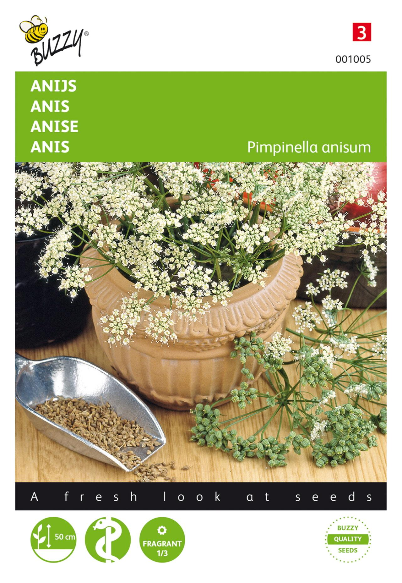 Pimpinella anisum plant
