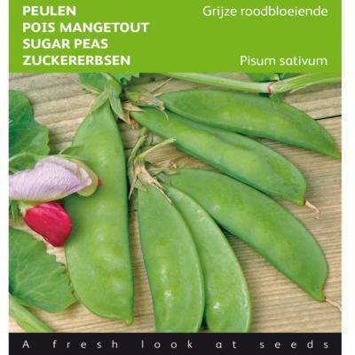 pisum-sativum-grijze-roodbloeiende