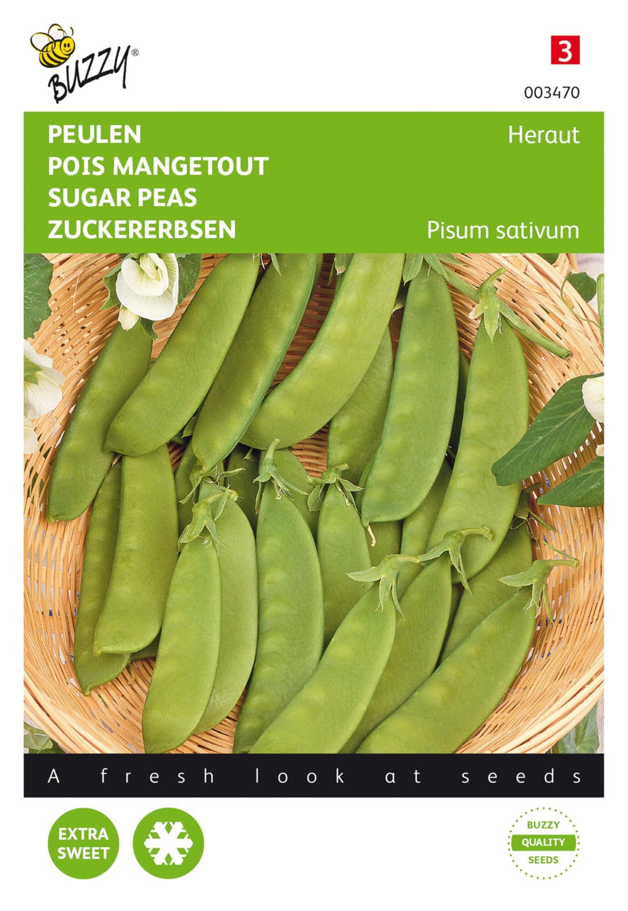 Pisum sativum 'Heraut' plant