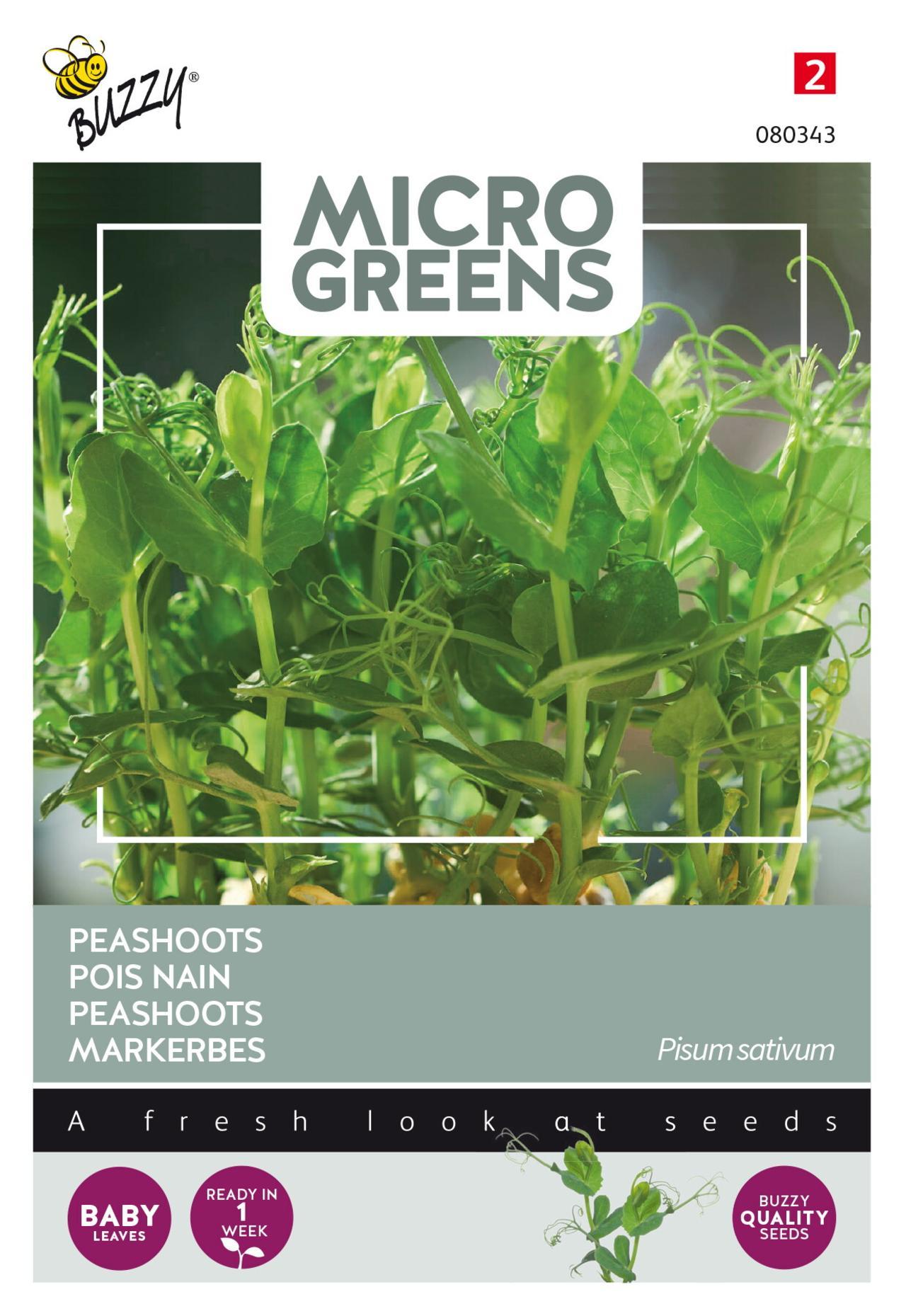 Pisum sativum 'Peashoots' (microgreens) plant
