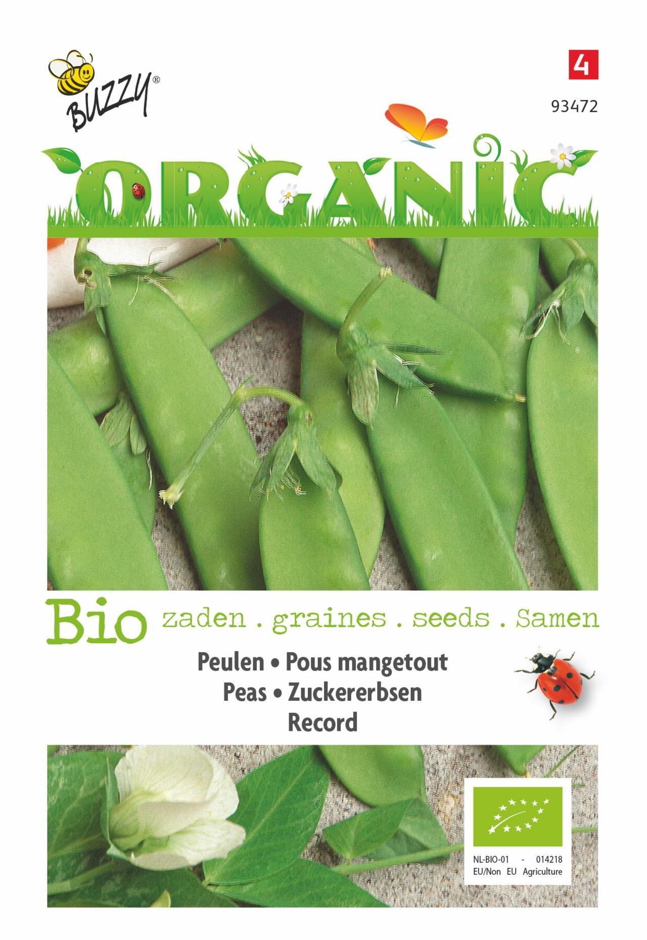 Pisum sativum 'Record' (BIO) plant