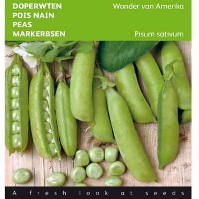 pisum-sativum-wonder-van-amerika