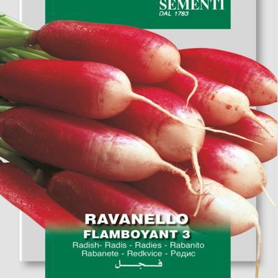 raphanus-sativus-flamboyant-3