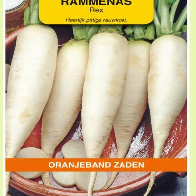 raphanus-sativus-rex