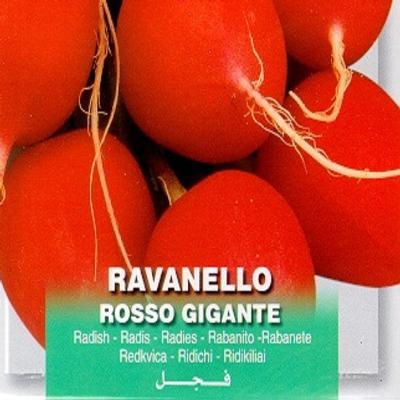 raphanus-sativus-rosso-gigante