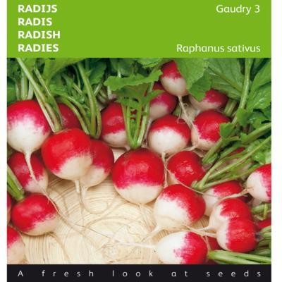 raphanus-sativus-var-sativus-gaudry-3