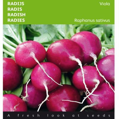 raphanus-sativus-var-sativus-viola