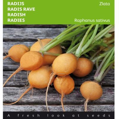 raphanus-sativus-var-sativus-zlata