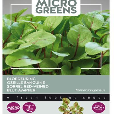 rumex-sanguineus-microgreens