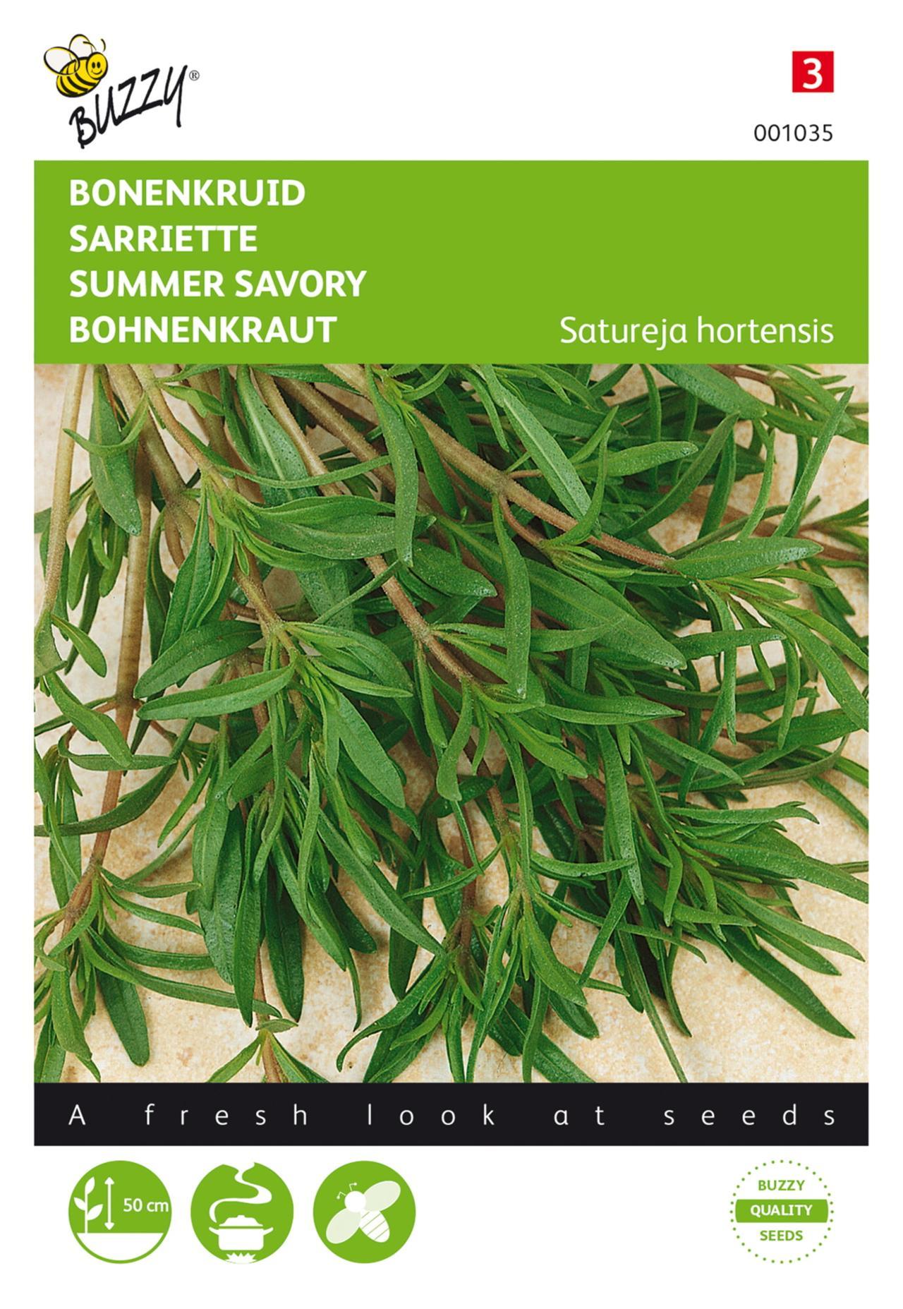 Satureja hortensis plant