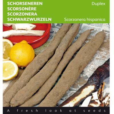 scorzonera-hispanica-duplex