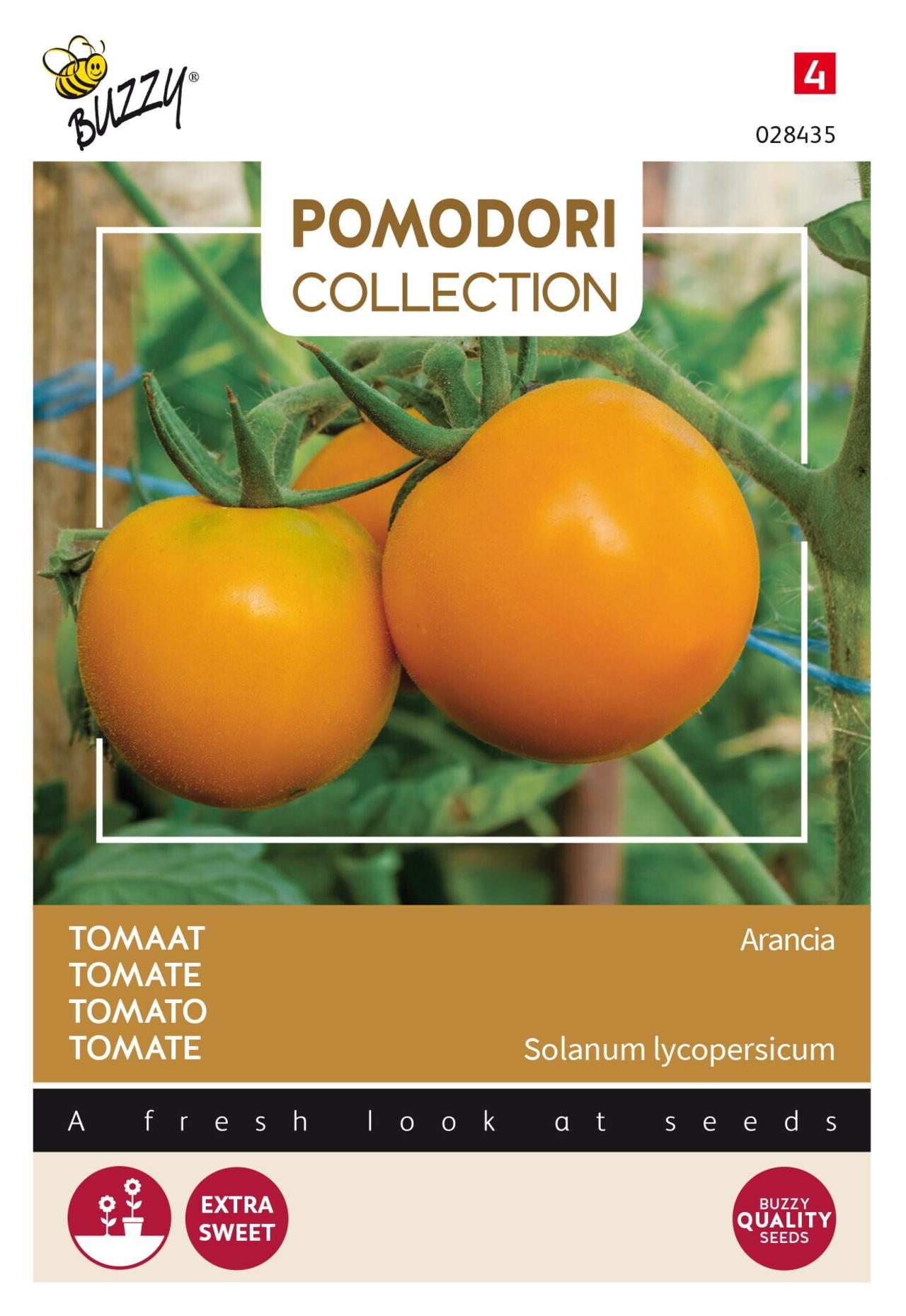 Solanum lycopersicum 'Arancia' plant