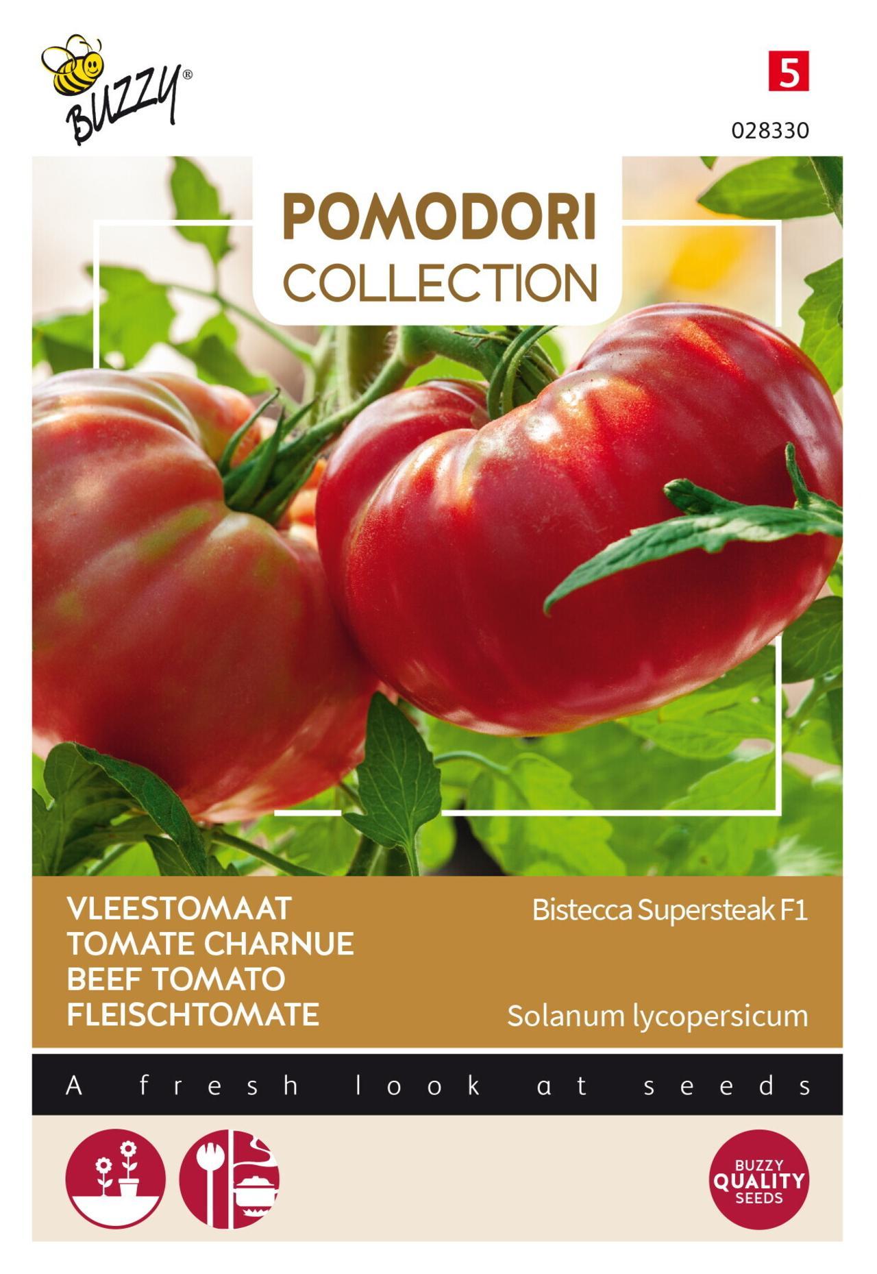 Solanum lycopersicum 'Bistecca F1' plant
