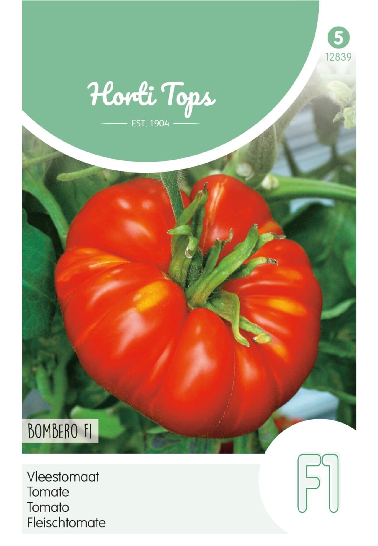 Solanum lycopersicum 'Bombero F1' plant