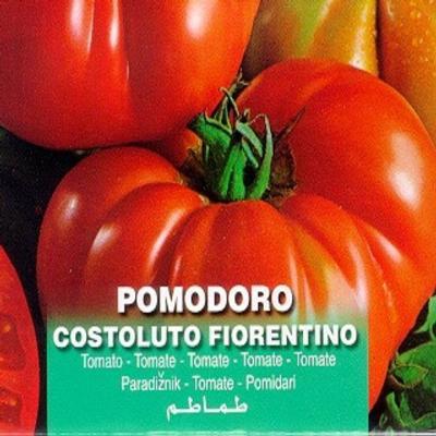 solanum-lycopersicum-costoluto-fiorentino