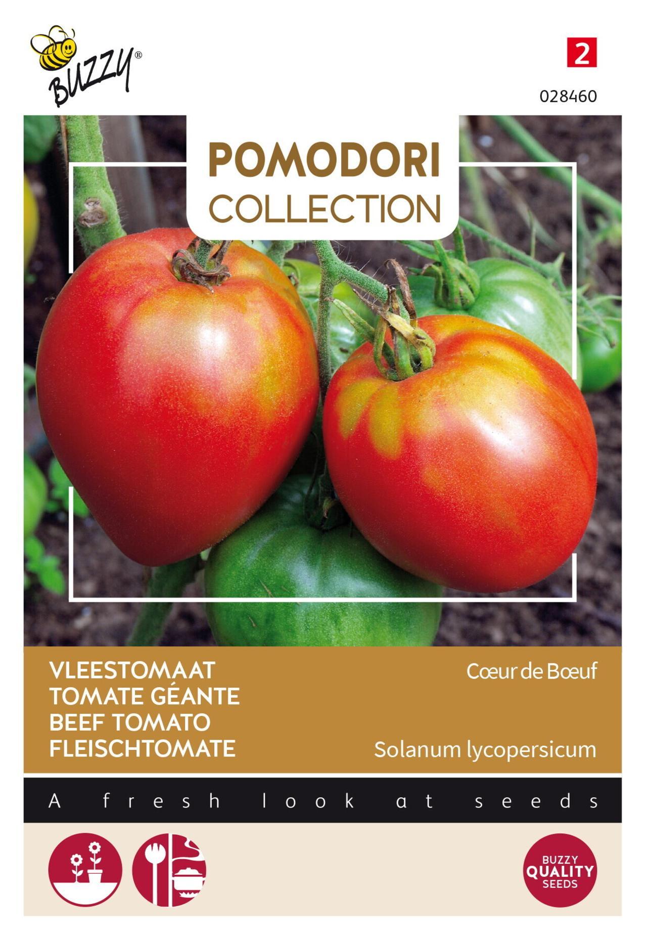 Solanum lycopersicum 'C?ur de B?uf' plant