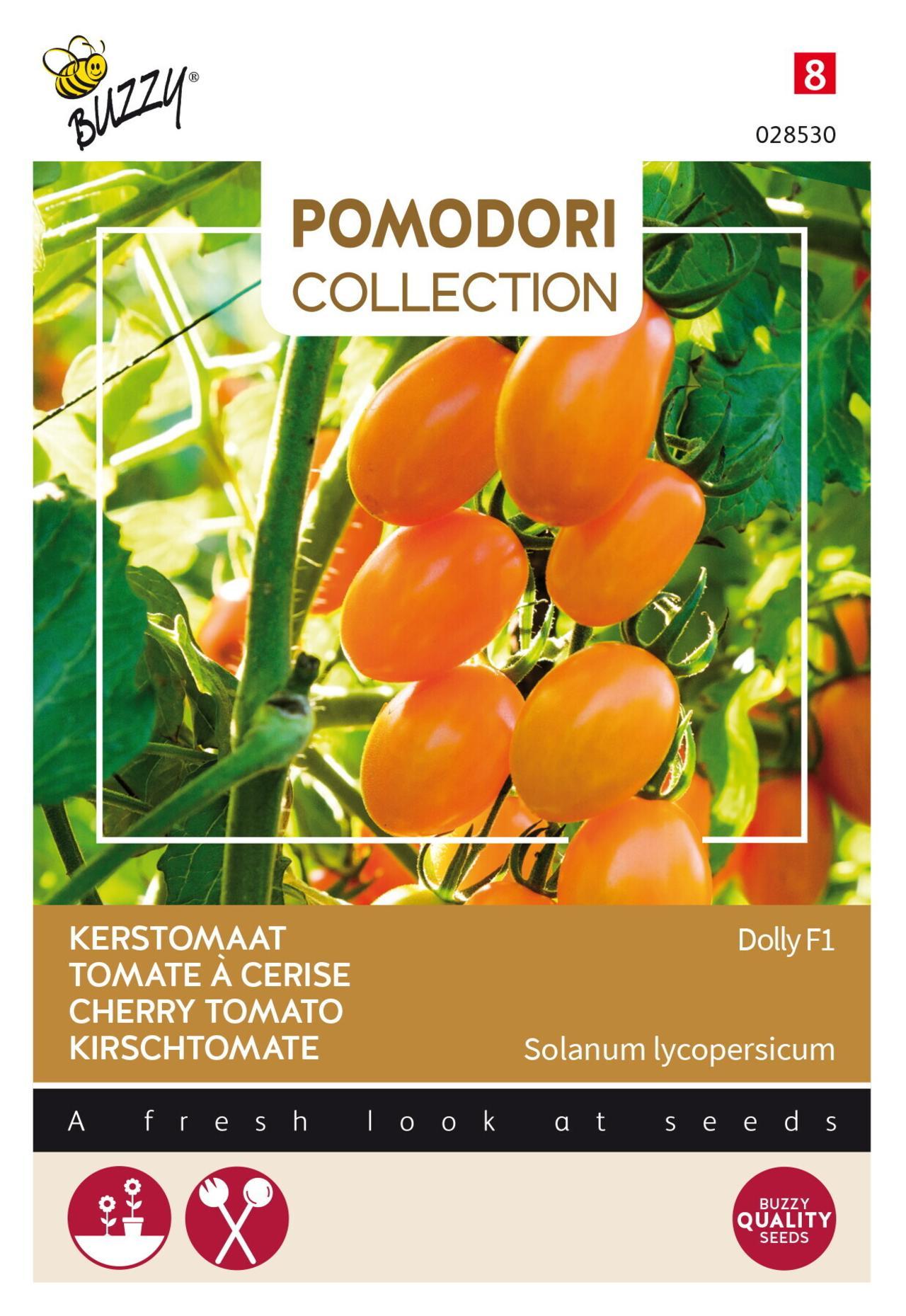 Solanum lycopersicum 'Dolly F1' plant
