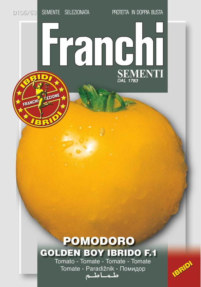 Solanum lycopersicum 'Golden Boy HY F1' plant