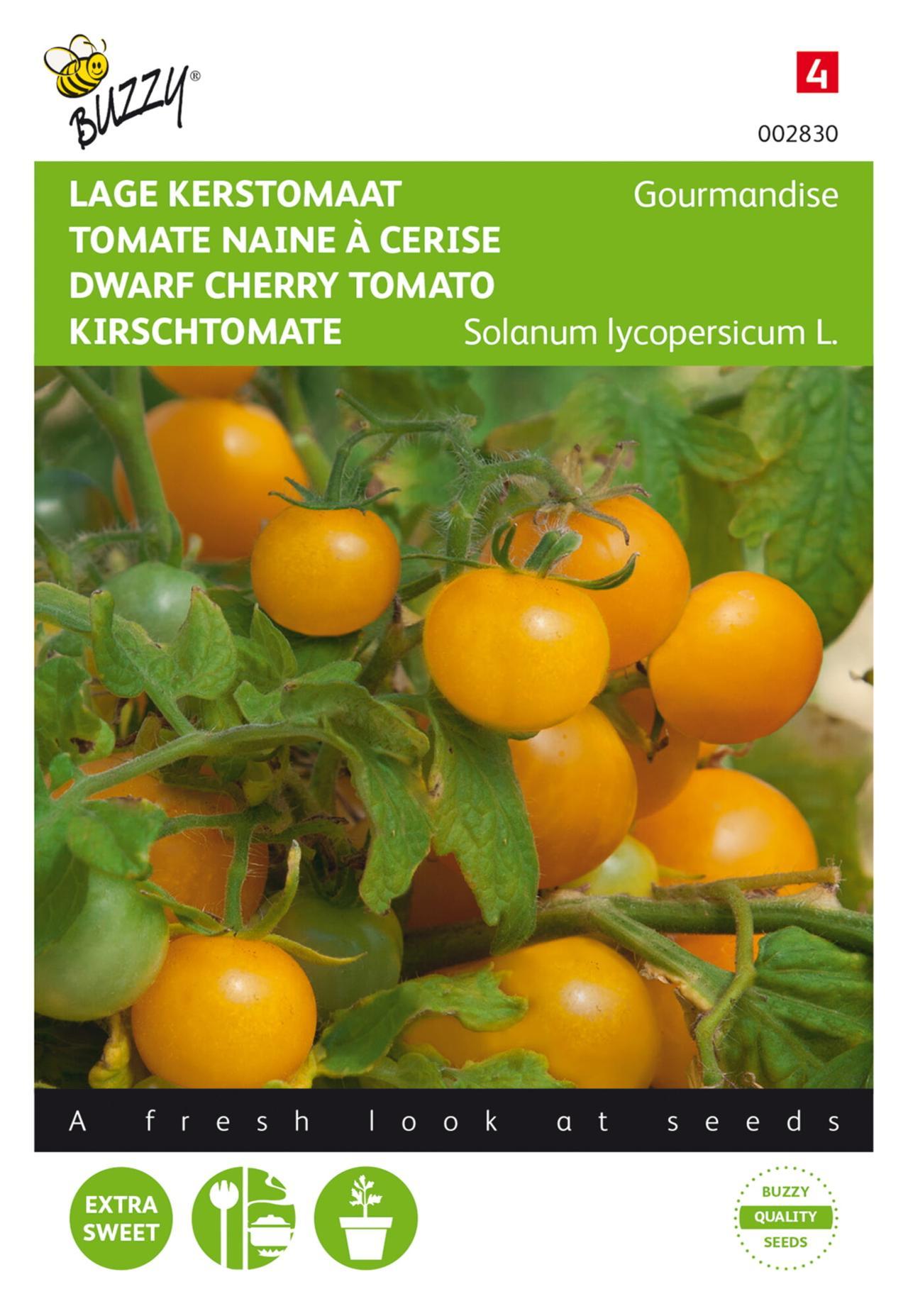 Solanum lycopersicum 'Gourmandise' plant