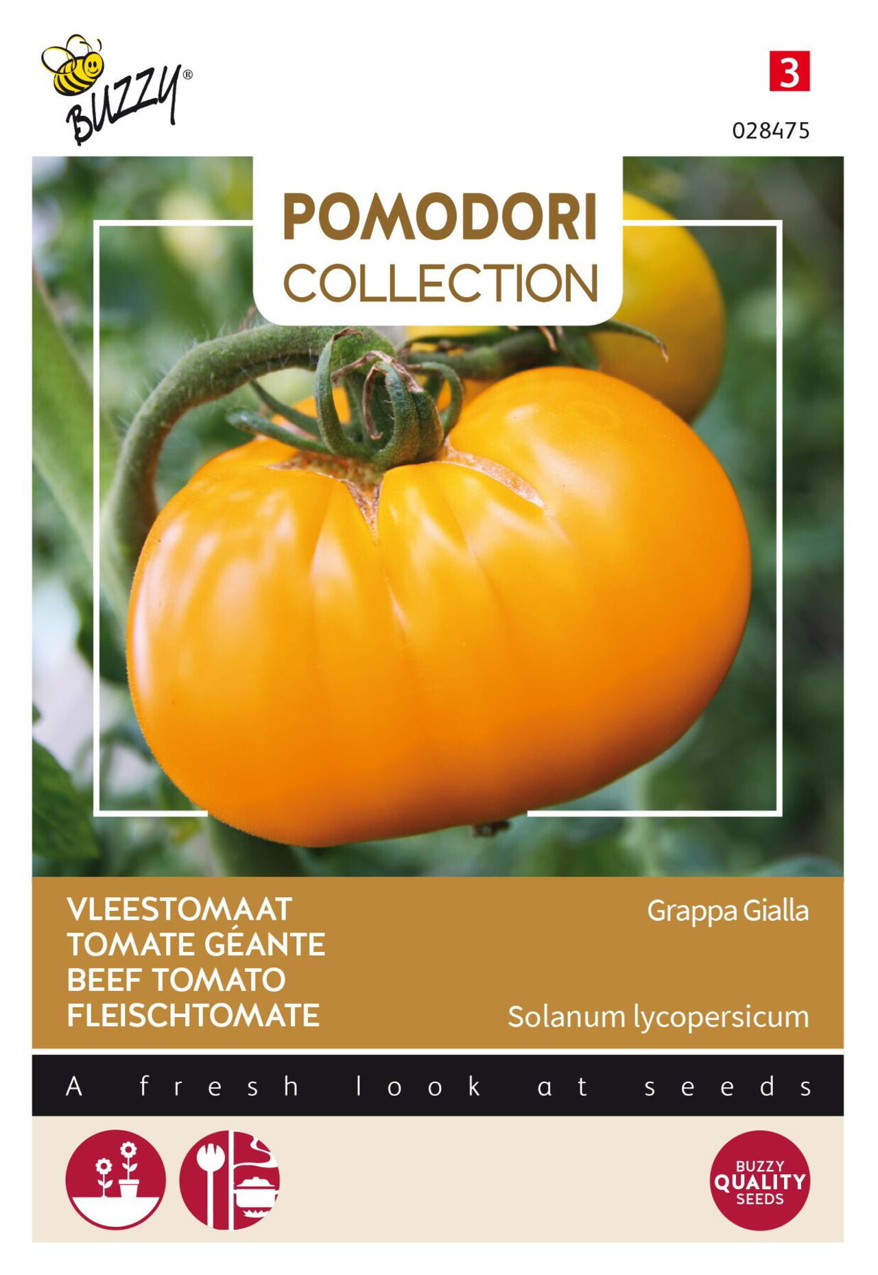 Solanum lycopersicum 'Grappa Gialla' plant