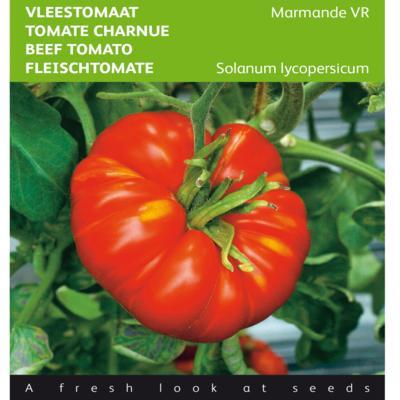 solanum-lycopersicum-marmande-vr
