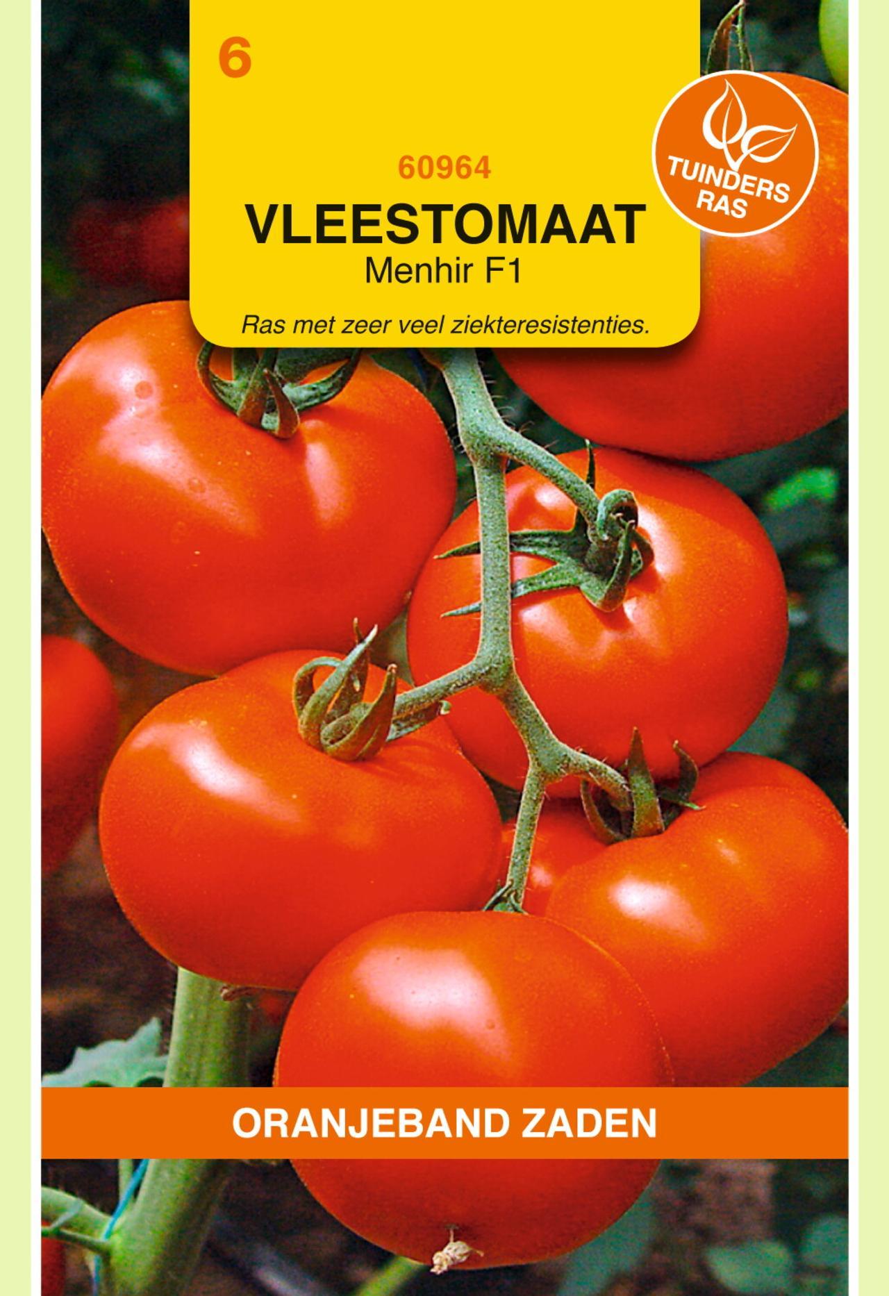 Solanum lycopersicum 'Menhir F1' plant