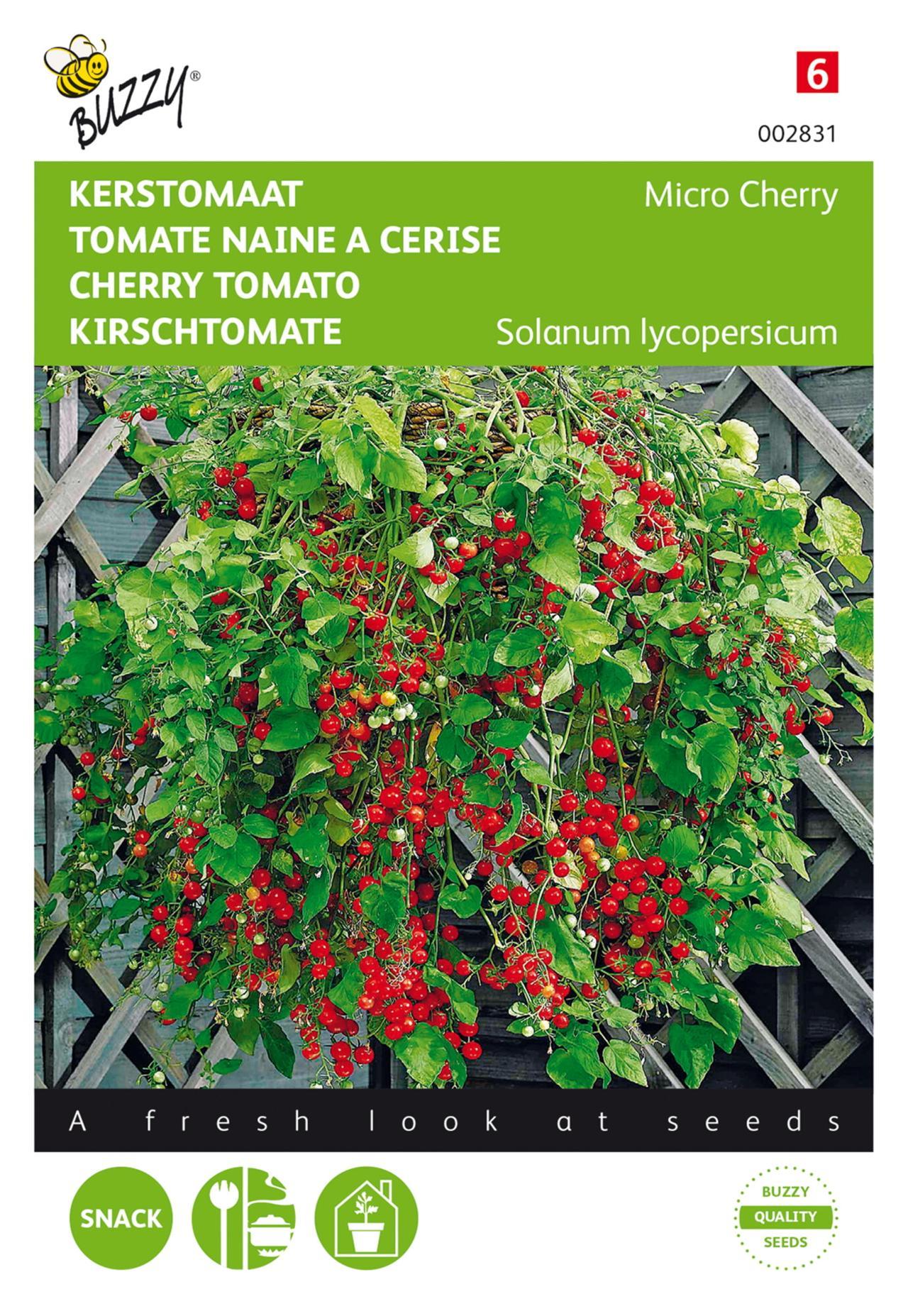 Solanum lycopersicum 'Micro Cherry' plant