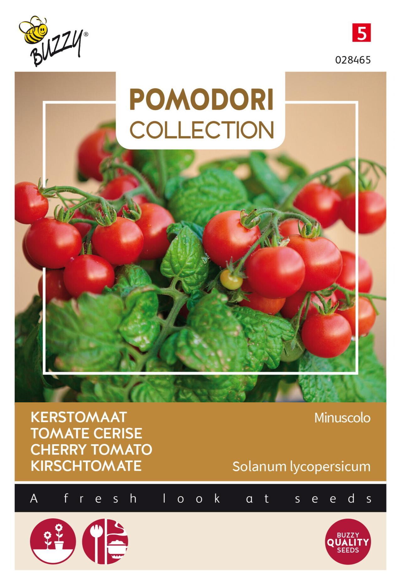Solanum lycopersicum 'Minuscolo' plant