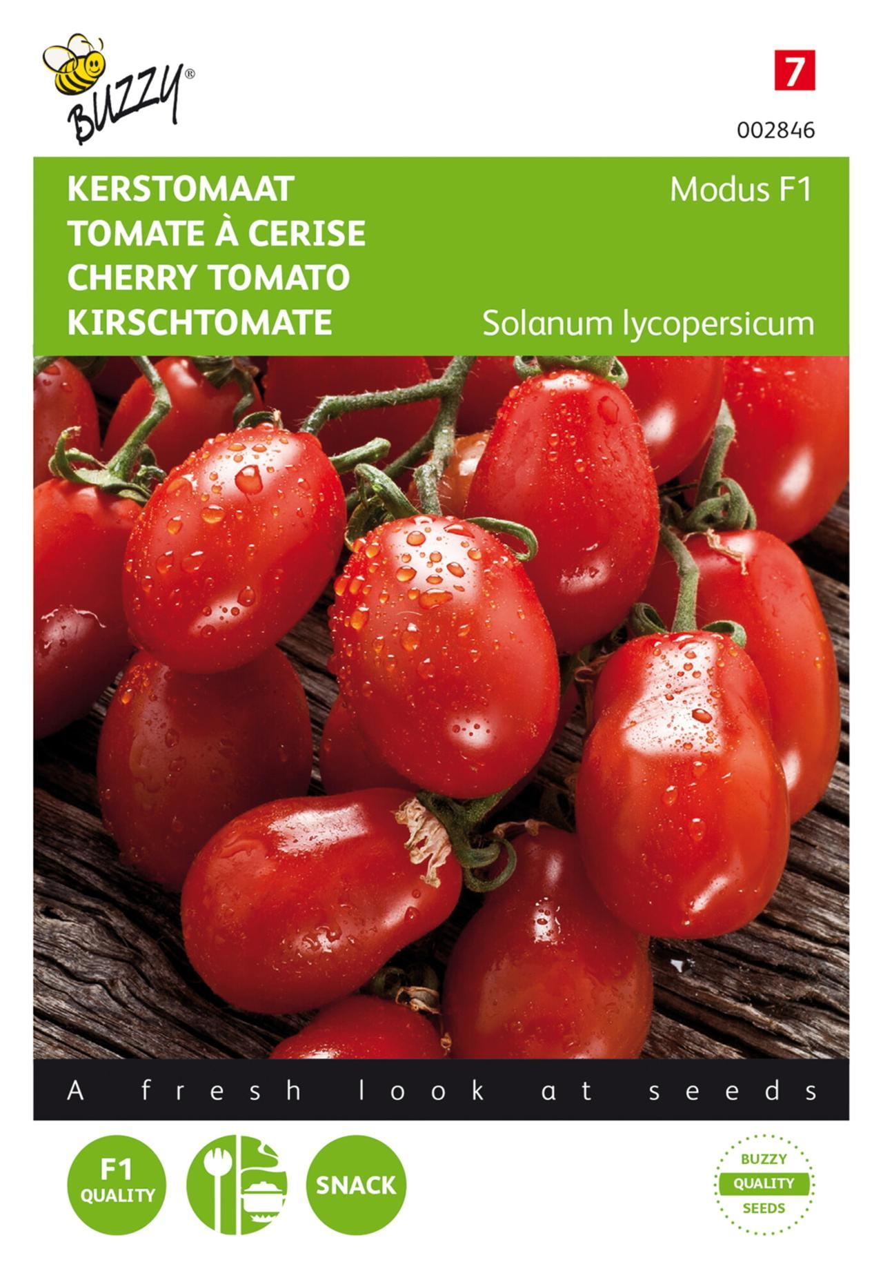 Solanum lycopersicum 'Modus F1' plant