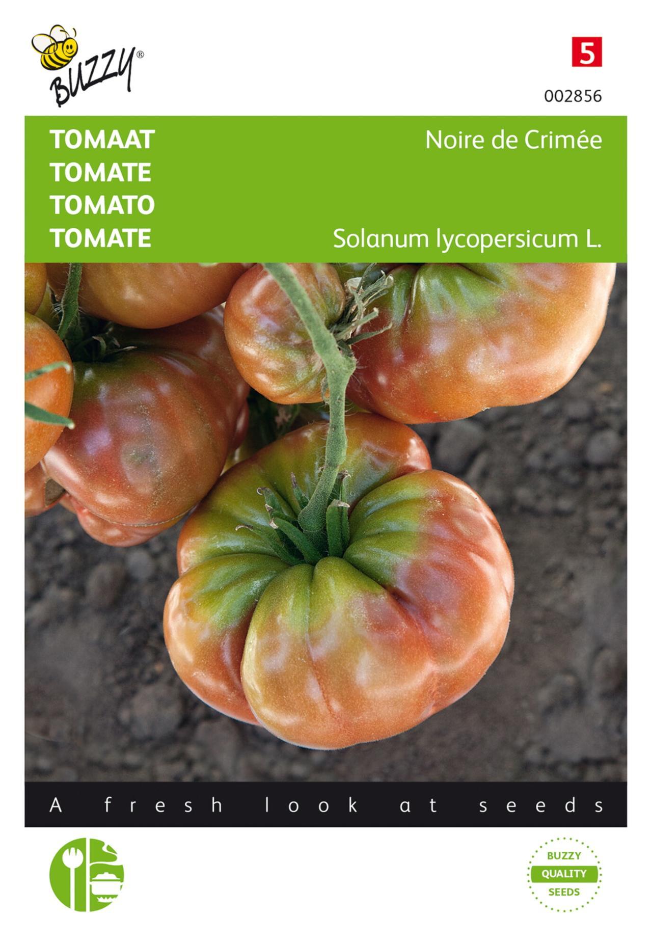 Solanum lycopersicum 'Noire de Crimée' plant