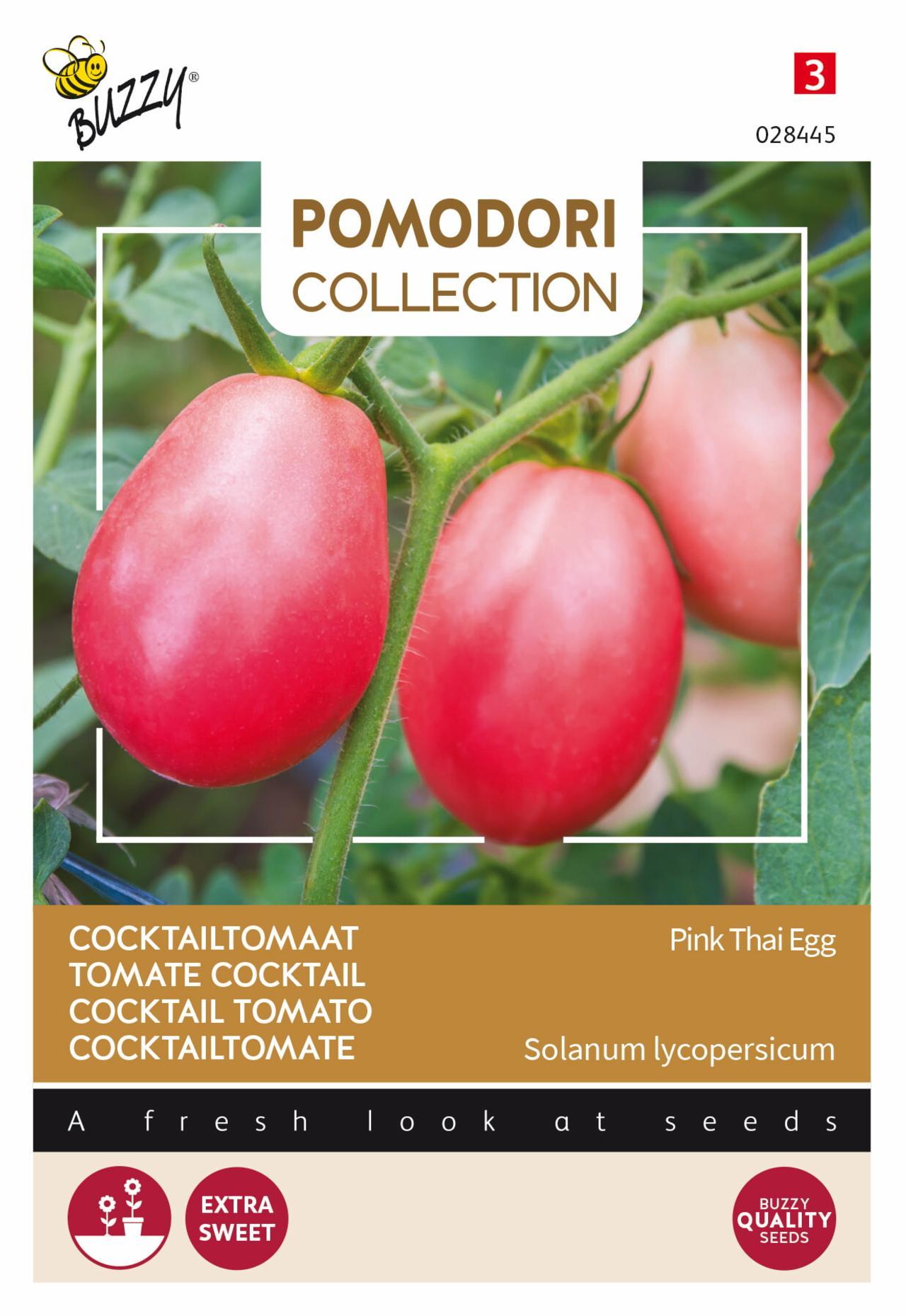 Solanum lycopersicum 'Pink Thai Egg' plant